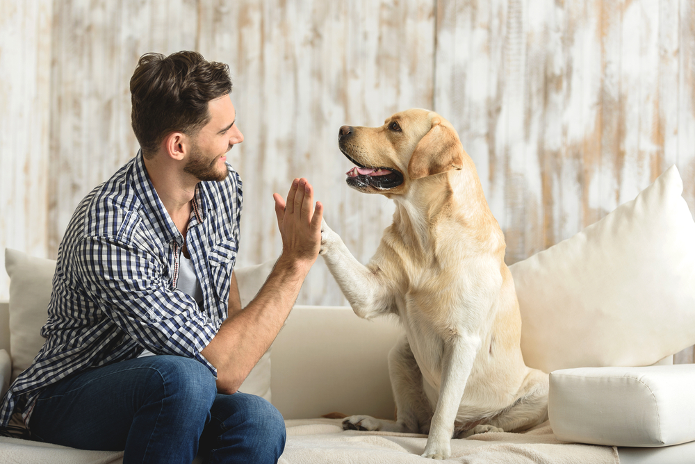 Fun Activities To Do With Your Dog On Your Day Off
